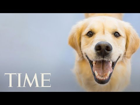 Evidence That Owning A Dog Is Really Good For You: Lower Stress Levels, Decreases Asthma Risk | TIME
