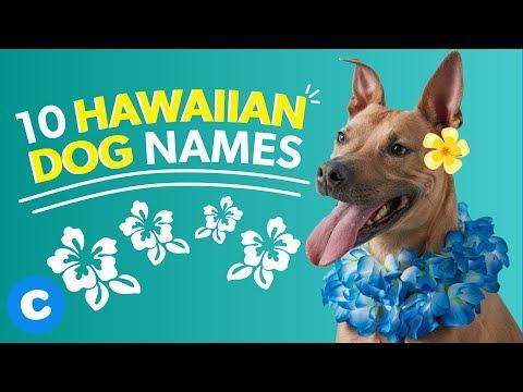 Hawaiian Dog Names | Chewy