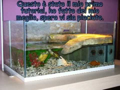 Tutorial come costruire una tartarughiera youtube for Acquario grande per tartarughe