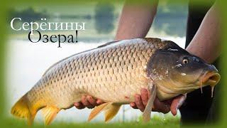 Серёгины озера Карпы ломают крючки и рвут леску на раз два Платная рыбалка в Дмитрове