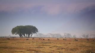 Secret Of Tanzania Become Best Safari Destination 2020