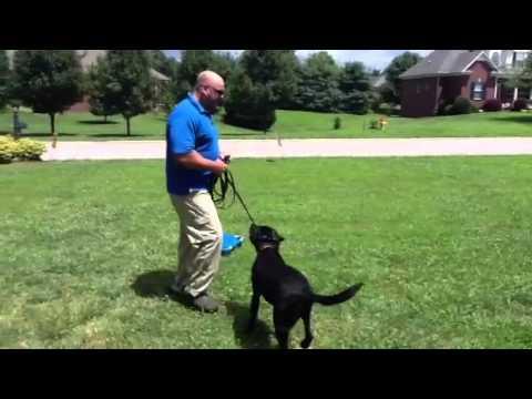 Pak Masters Dog Training