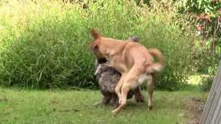 Eläimellistä menoa! - Animal life go by!
