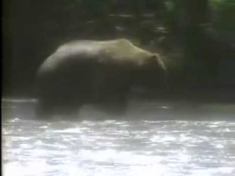 Commercial - Reagan 1984 Election Ad (Bear in the woods)