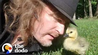 Guy Teaches His Rescued Gosling How To Fly | The Dodo Soulmates