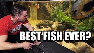 """The ONLY aquarium fish I would keep... """"UARU"""