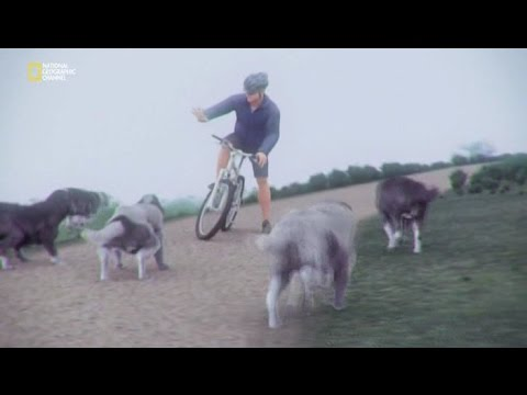 видео: Советы велосипедисту по защите от собак