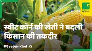 Sweet corn Farming (स्वीट काँर्न की खेती) In Baatein Kheti Ki - On Green TV