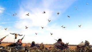 5 MAN LIMIT!!! Mallard Duck Hunting in Corn Field 2017