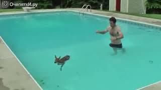 Люди помогают животным.