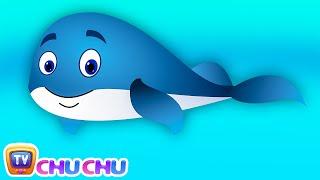 La Ballena Azul Rima De Cuarto De Niños | ChuChuTV Sea World | Animal Canciones Y Rimas Infantiles Para Los Niños