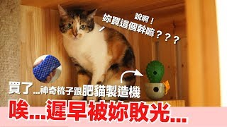肥貓製造機-亂買奇怪的貓物開箱-好味貓開箱-ep11