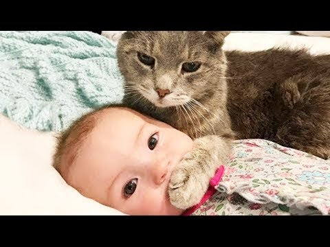 Babies and Cat Fails Compilation |  BABY AND PET