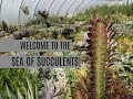 Succulent Workshops and Garden Center Tour! and A SEA OF SUCCULENTS!