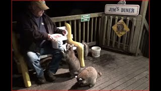 Five Baby Raccoons on Friday Night