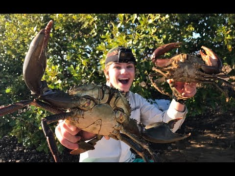 Thumbnail: Catch n Cook barehanded MUDCRABS! HD