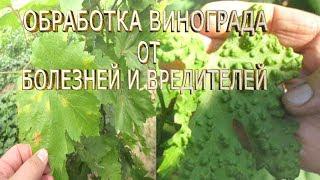 видео Вредители и болезни винограда, описание с фотографиями и способы лечения