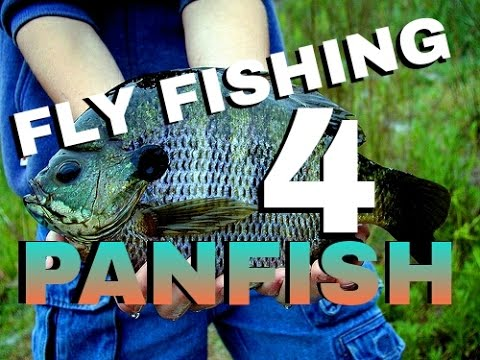 How to Fly Fish for Panfish   Beginner's Fly Fishing