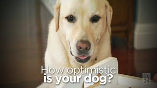 How Optimistic Is Your Dog?