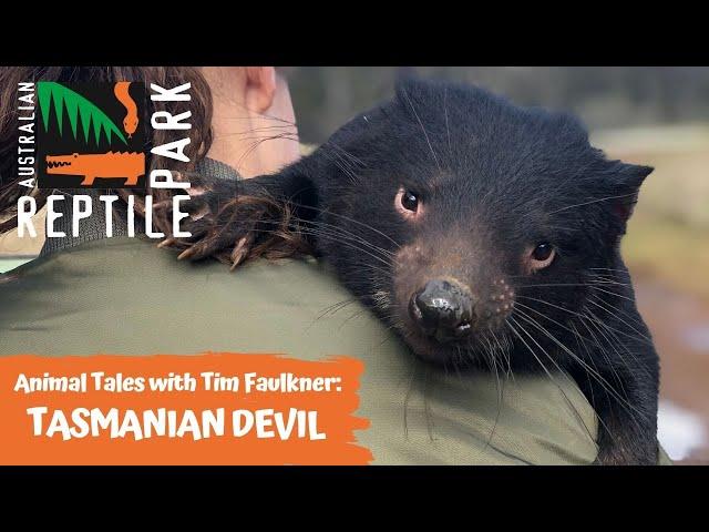 ANIMAL TALES WITH TIM FAULKNER | EPISODE TWO | TASMANIAN DEVILS
