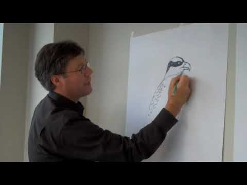 David Allen Sibley: How to Draw an Osprey