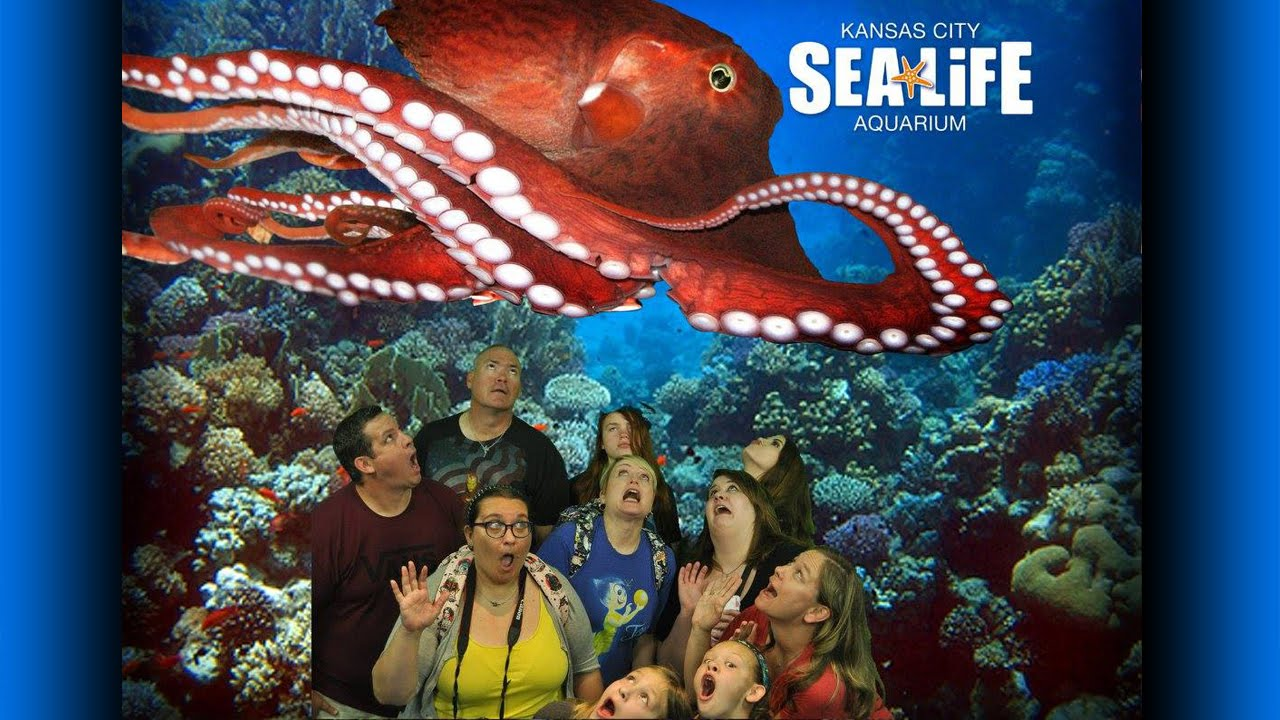 Legoland Discovery Center KC   Sea Life Aquarium   T-Rex ...
