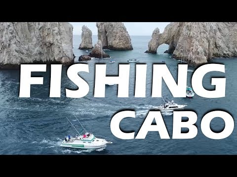 Marlin Fishing in Cabo and Whales! - Sailing Doodles Episode