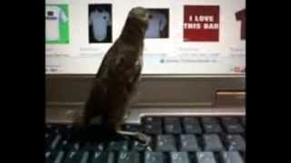 My pet sparrow, elbee