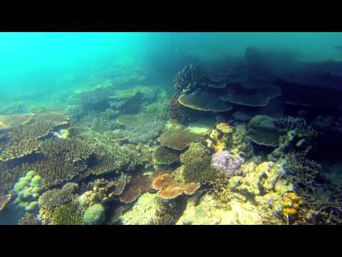 ROV and towed camera marine science surveys - Geo Oceans