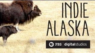 I Am A Musk Ox Farmer | INDIE ALASKA