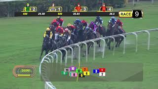 Vidéo de la course PMU PRIX KRANJI STAKES A