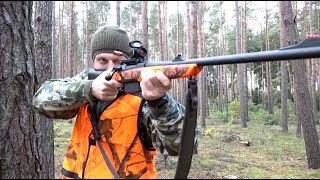 The Shooting Show - fast-paced driven wild boar in Poland thumbnail