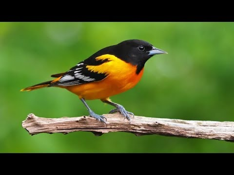 North America Has Lost 3 Billion Birds Since 1970