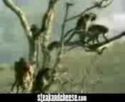 monkey kiss woman pussy