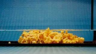 Гидроизоляция нанокомпозитный РИФ (чудо-песок)(Эффективный, уникальный и высококачественный, экологически чистый нанополимерминеральный гидроизоляцион..., 2011-05-05T10:31:34.000Z)