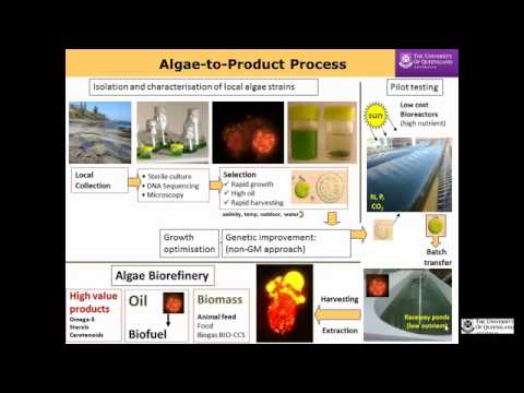Biofuel production from algae to address food and energy sec