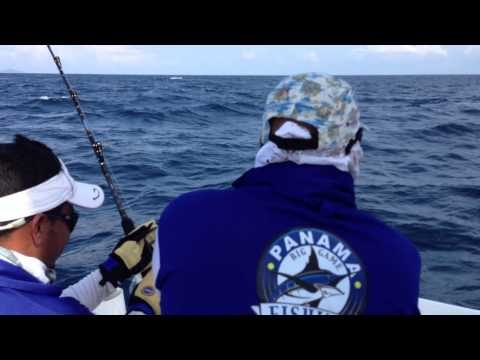 Panama Big Game Club Big Black Marlin