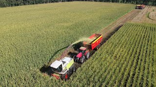2020 Chopping corn with Claas & Case IH
