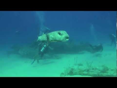 The Bridge -  Scuba Diving in Sint Maarten with Ocean Explorers Dive Center