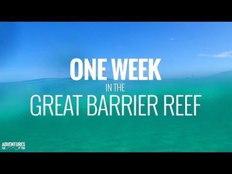 Great Barrier Reef: 1 Week of Scuba Diving and Snorkeling in 4K