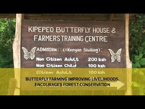 Butterfly farming improving livelihoods, encourages forest conservation