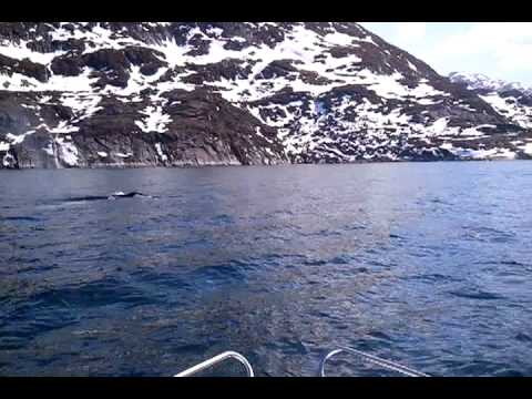 Whale-watching in the Nuuk-area - Greenland