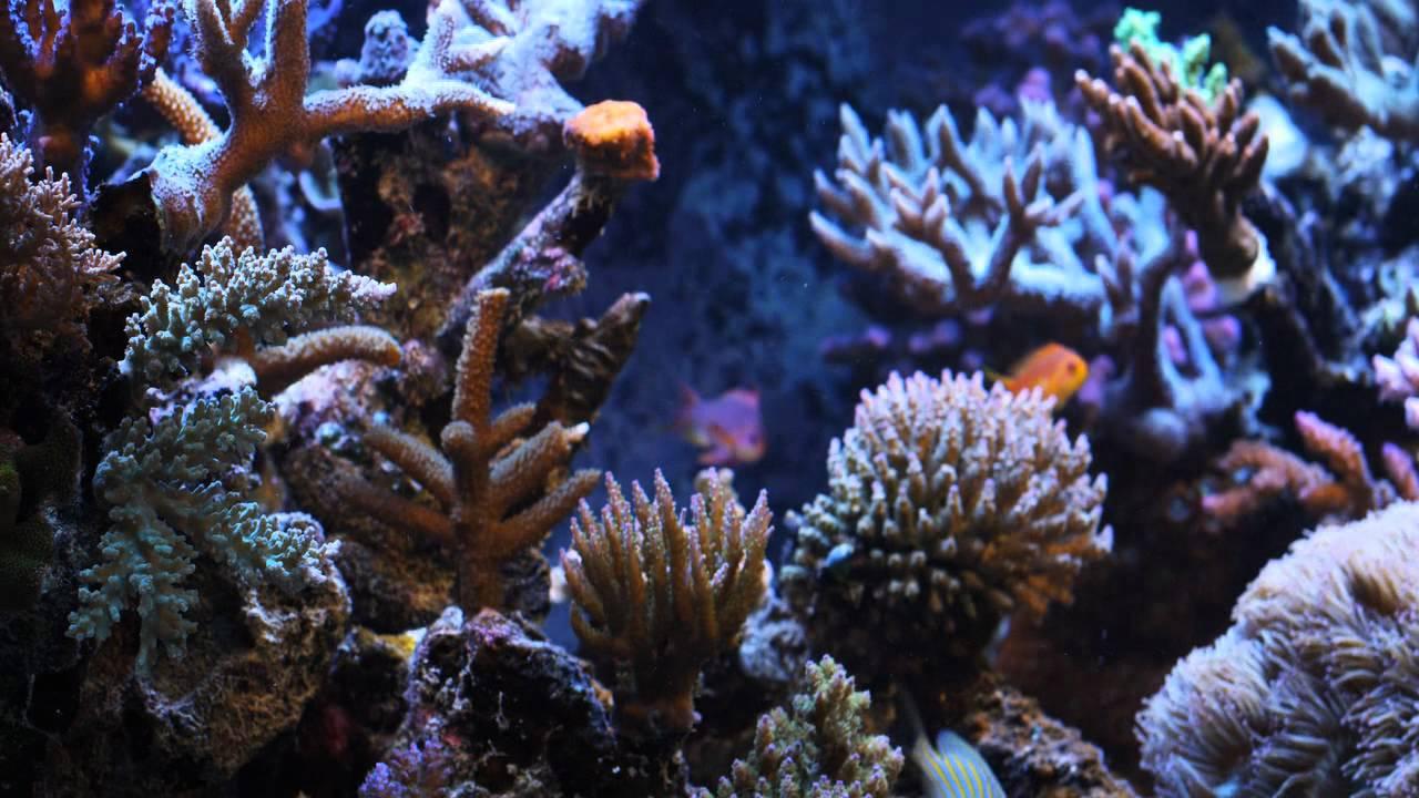 Aquarium natural sounds 3 youtube for Spacearium aquariums