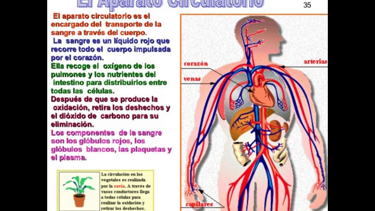 Cuidado Del Cuerpo Humano: EL CUERPO HUMANO CON SUS SISTEMAS Y CUIDADOS.
