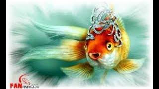Золотые рыбки уход и содержание