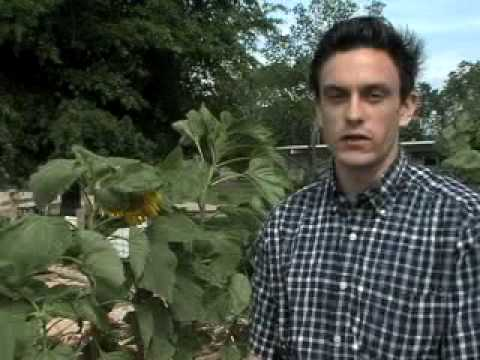 LOUISIANA FARM BUREAU: POINTE COUPEE GARDEN
