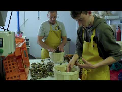Marine Institute Shellfish Food Safety