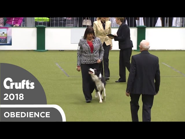 Obedience - Dog Championship - Part 3 | Crufts 2018