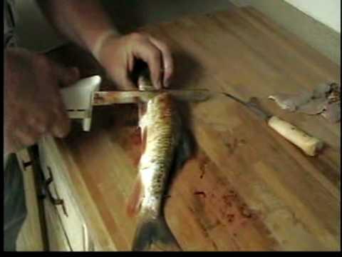 How To Fillet Sucker Fish