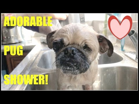 HILARIOUS DOG SHOWER!  | LAURA CLERY